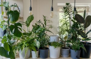 Connecting with nature: the 'biophilia effect'